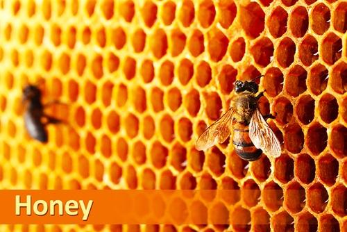 propoleos con abejas