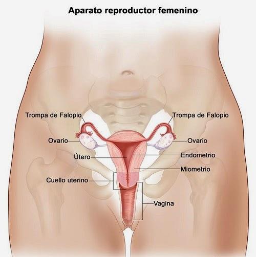 cáncer de ovario