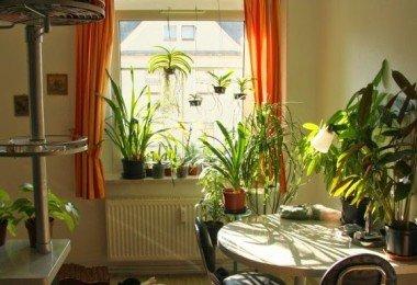 indoor-plantation3