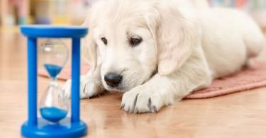 Remedios naturales para las mascotas
