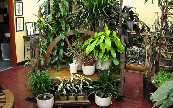 Plantas de interior que limpian el aire y eliminan toxinas - Como cuidar las plantas de exterior ...