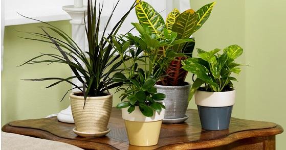 Consejos para cuidar estas plantas de interior
