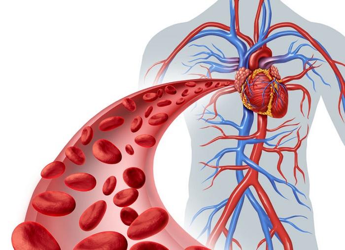 Cómo mejorar la circulación de la sangre