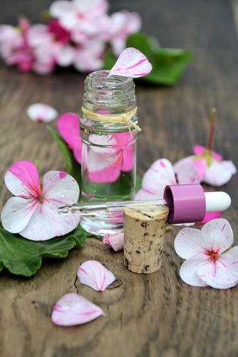 eliminar las garrapatas geranio rosa