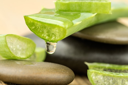 El gel del aloe vera ideal para calmar el dolor de rodilla