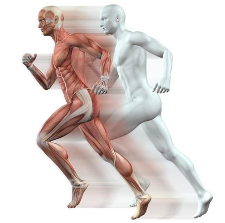 Los efectos en el cuerpo con un tmetabolismo que funciona más rápido