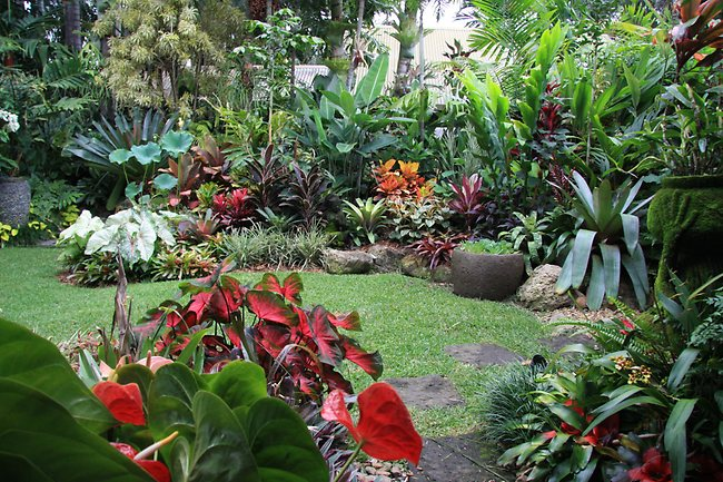 jardín tropical colorido