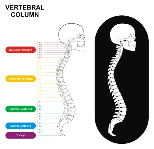 dolor en la espalda baja Columna