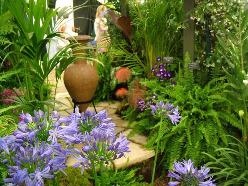 helechos jardín