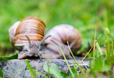eliminar plagas de caracoles y babosas
