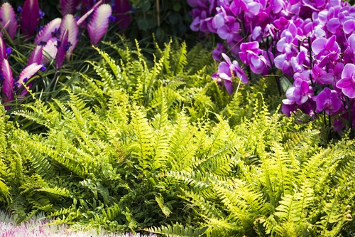 helechos jardín plantas