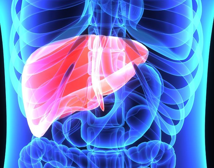 limpiar el hígado para bajar de peso