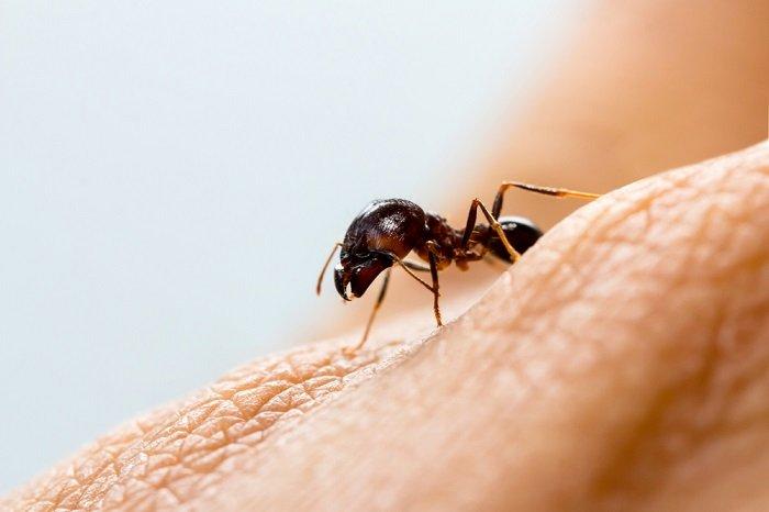 Remedios para las picaduras de hormigas - Como acabar con las hormigas en el jardin ...