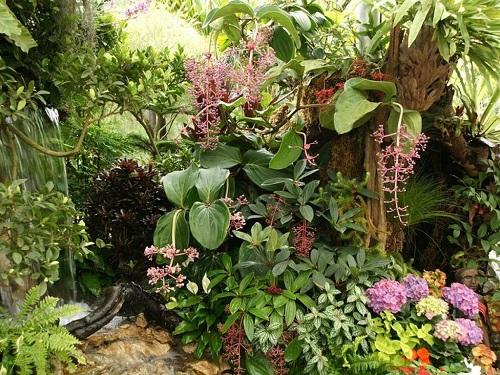 plantas para crear un jardín de plantas tropicales