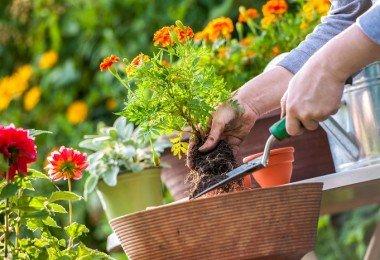 consejos para regar un jardin con flores
