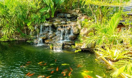 Jardines verdes para darle vida al hogar for Jardin acuatico
