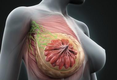 senos vector