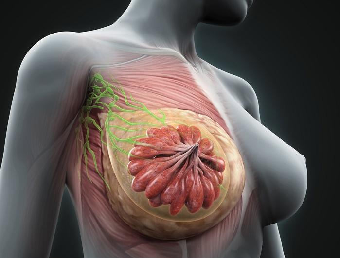 remedios para perder grasa del busto