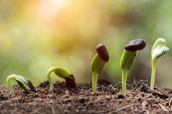 cómo preparar la tierra para el cultivo