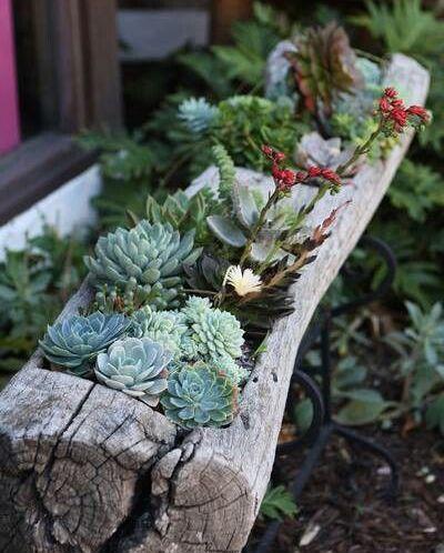 macetas naturales jardín