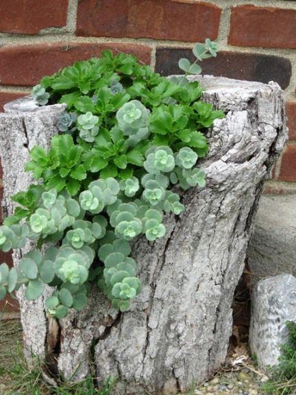 suculentas en tronco jardín