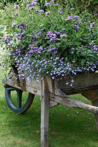 flores para decoración en jardín
