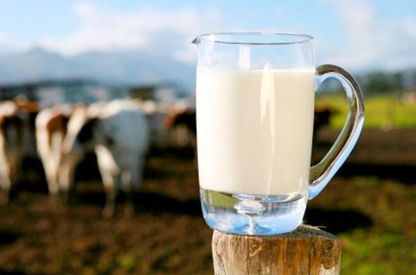 lácteos orgáncios