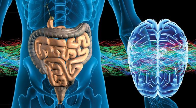 intestino inteligente