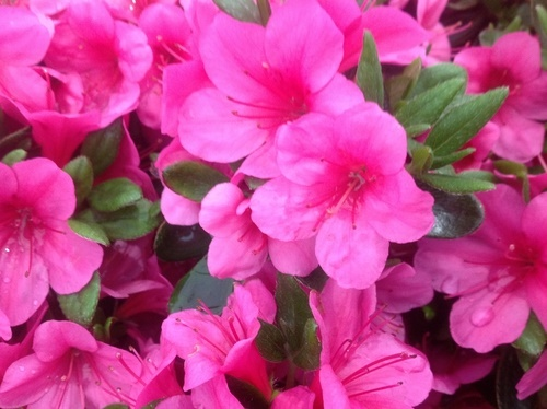 fertilizante para flores con café molido