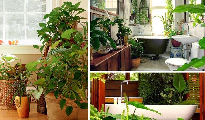 fondo plantas de interior desintoxicar el aire