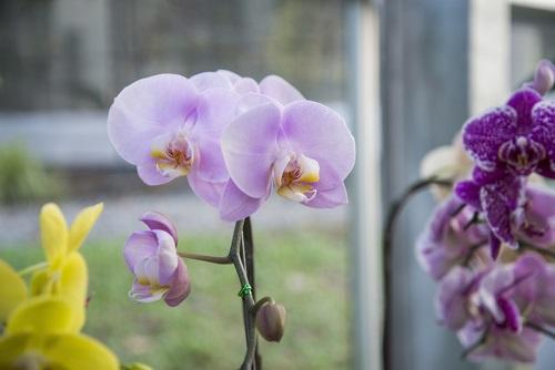 orquídea plantas de interior que modifican el ambiente