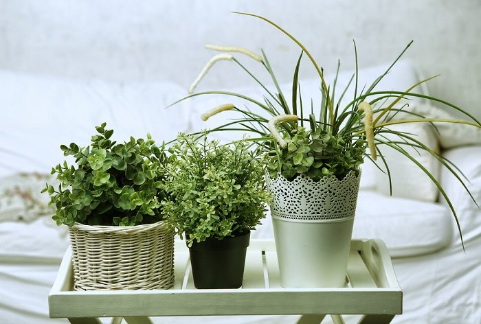plantas para habitación