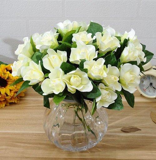 plantas para habitación gardenia
