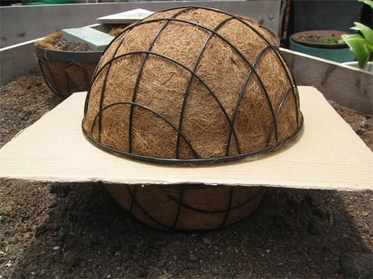 esferas de suculentas