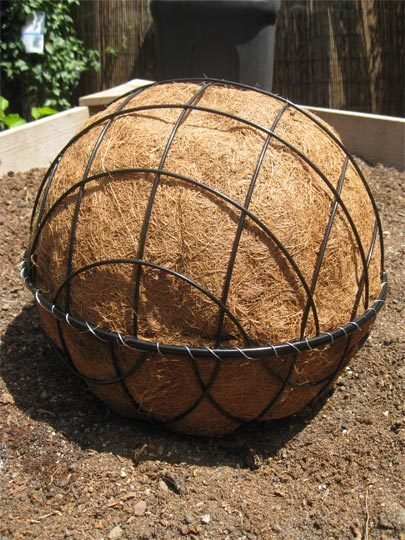 canastas para esfera de suculentas