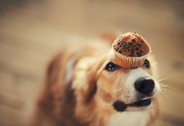 Alimentos que no debes dar a mascotas