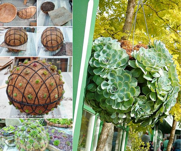 Succulent-Ball-F