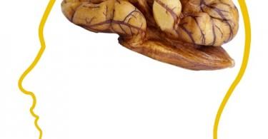 cerebro nuez1