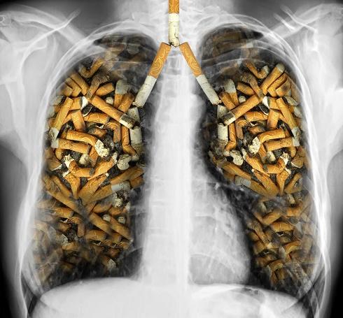 nicotina cigarros pulmones