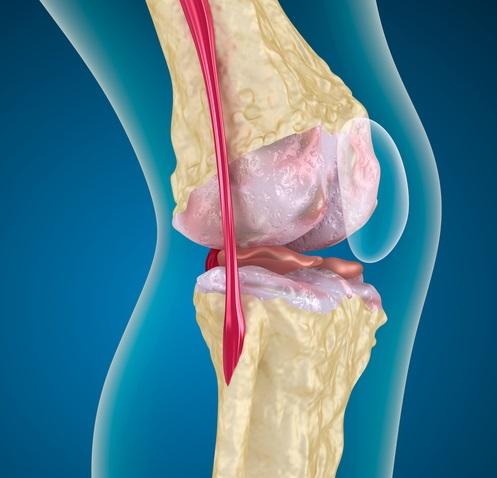problemas en los huesos por subir y bajar de peso