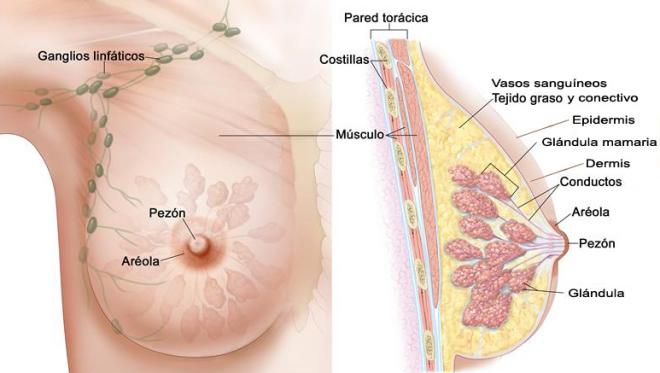 desintoxicacion-de-axila-cancer-de-mama