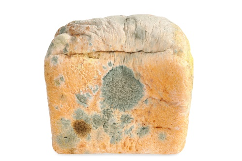 intoxicación por moho pan