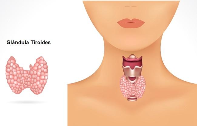 señales de que padeces hipotiroidismo
