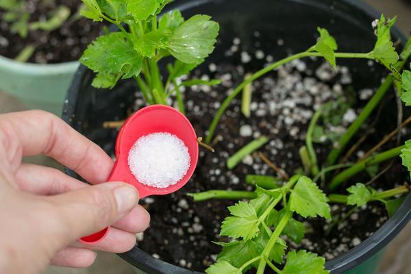 sales de epsom en el jardín
