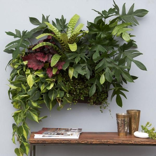 decoración de paredes con plantas