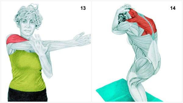 estiramientos musculares del hombro