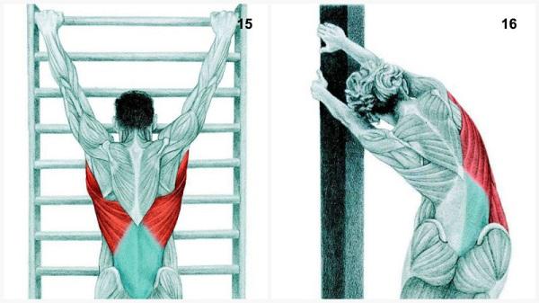 estiramientos musculares espina