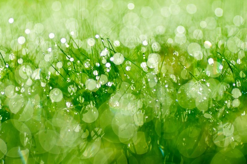 verde símbolos de los sueños