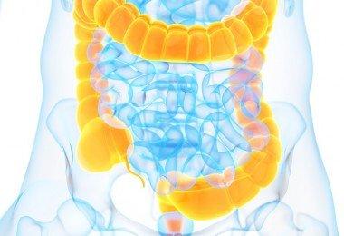 colon intestino grueso