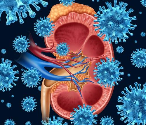 Infeccion Urinaria Baño De Asiento:La importancia de prevenir las infecciones urinarias